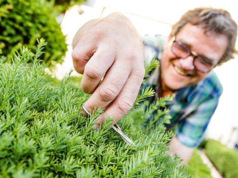 Bild mit Link zum Thema Gartenpflege